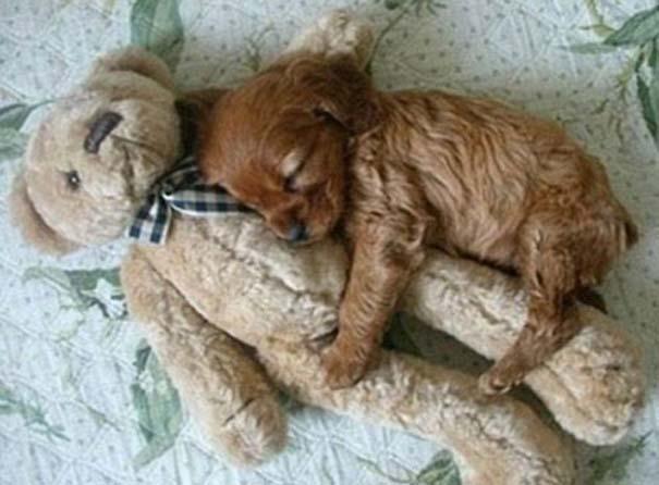 Σκύλοι στις πιο ασυνήθιστες στάσεις ύπνου (13)