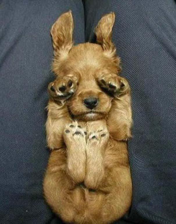 Σκύλοι στις πιο ασυνήθιστες στάσεις ύπνου (17)