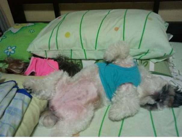 Σκύλοι στις πιο ασυνήθιστες στάσεις ύπνου (18)