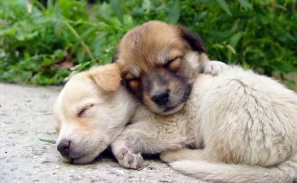 Σκύλοι στις πιο ασυνήθιστες στάσεις ύπνου (21)