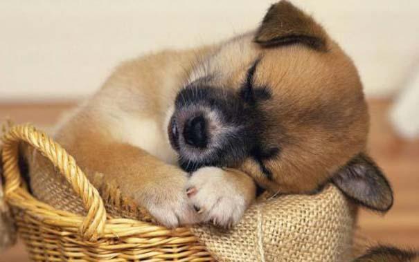 Σκύλοι στις πιο ασυνήθιστες στάσεις ύπνου (22)