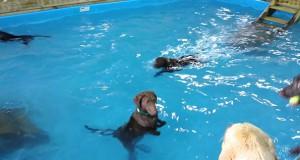 Σκύλος δεν καταλαβαίνει την έννοια της κολύμβησης (Video)