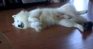 Σκύλος δέχεται επίθεση από μικροσκοπικό γατάκι (Video)