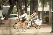 Σκύλος με αόρατο ιδιοκτήτη