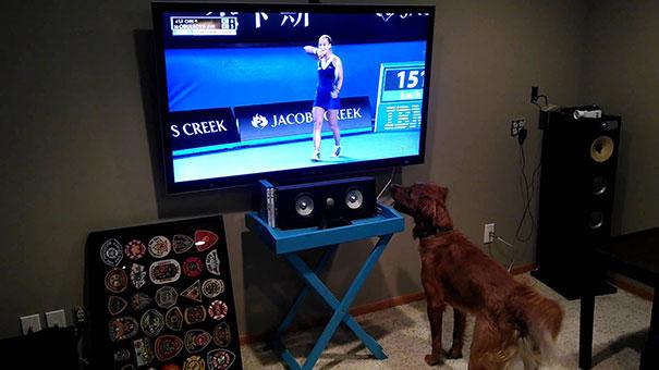Αυτός ο σκύλος πραγματικά λατρεύει το Tennis