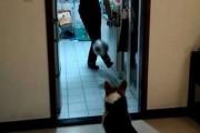 Σκύλος τερματοφύλακας