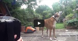 Σκύλος τραγουδάει υπό τους ήχους του ακορντεόν (Video)