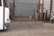 Σκύλος χορεύει σε ρυθμούς 80s