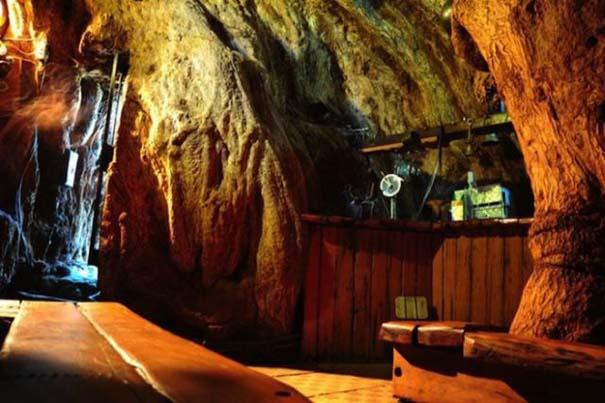 Στο εσωτερικό ενός ζωντανού δέντρου 6.000 ετών (5)