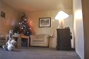 Τι μπορεί να προκαλέσει ένα χριστουγεννιάτικο δέντρο σε ελάχιστα δευτερόλεπτα