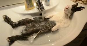 Ζώα που απολαμβάνουν το μπάνιο τους (Video)