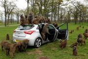 Ζώα που δεν θες να συναντήσεις στο δρόμο
