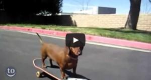 Ζώα που κάνουν skateboard (Video)