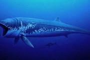 Τα 10 μεγαλύτερα πλάσματα όλων των εποχών