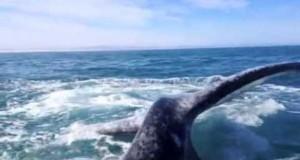 Ανυποψίαστη γυναίκα έφαγε σφαλιάρα από φάλαινα! (Video)