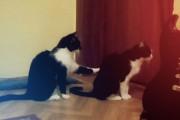 Γάτα προσπαθεί να ζητήσει συγγνώμη αλλά βρίσκει παγερή στάση...