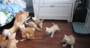 Γάτα τρομοκρατεί κατά λάθος τα μικρά της (Video)