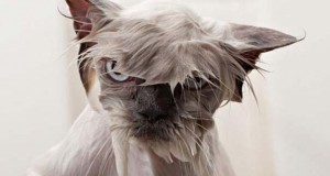 19 φωτογραφίες που αποδεικνύουν πως οι γάτες μισούν το μπάνιο