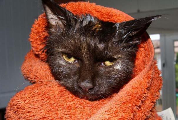 Φωτογραφίες που αποδεικνύουν πως οι γάτες μισούν το μπάνιο (4)