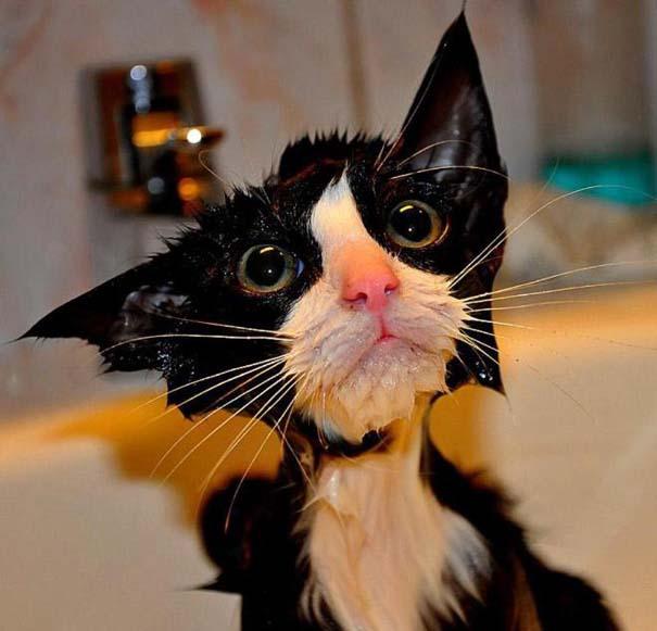 Φωτογραφίες που αποδεικνύουν πως οι γάτες μισούν το μπάνιο (8)