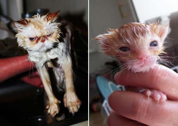 Φωτογραφίες που αποδεικνύουν πως οι γάτες μισούν το μπάνιο (10)
