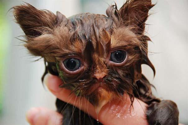 Φωτογραφίες που αποδεικνύουν πως οι γάτες μισούν το μπάνιο (11)