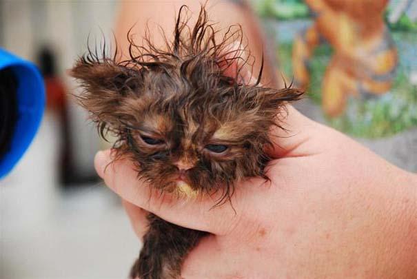 Φωτογραφίες που αποδεικνύουν πως οι γάτες μισούν το μπάνιο (12)