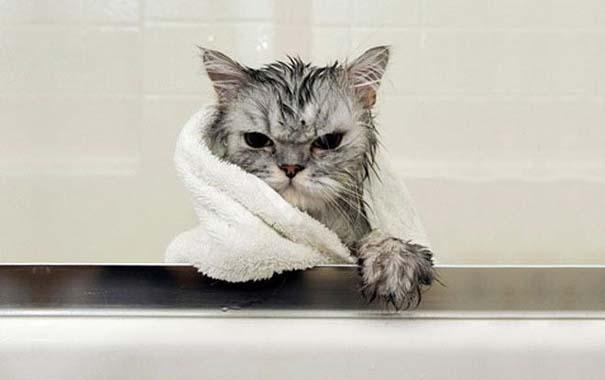 Φωτογραφίες που αποδεικνύουν πως οι γάτες μισούν το μπάνιο (13)