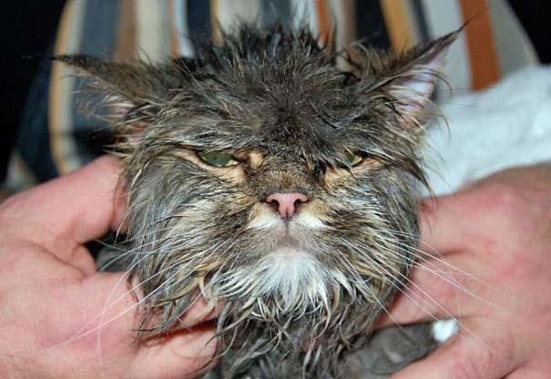 Φωτογραφίες που αποδεικνύουν πως οι γάτες μισούν το μπάνιο (14)