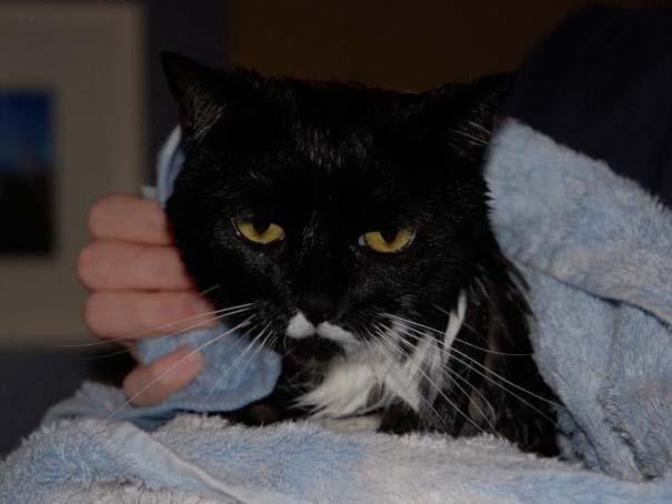Φωτογραφίες που αποδεικνύουν πως οι γάτες μισούν το μπάνιο (15)