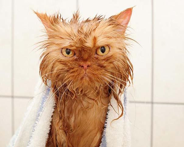 Φωτογραφίες που αποδεικνύουν πως οι γάτες μισούν το μπάνιο (16)