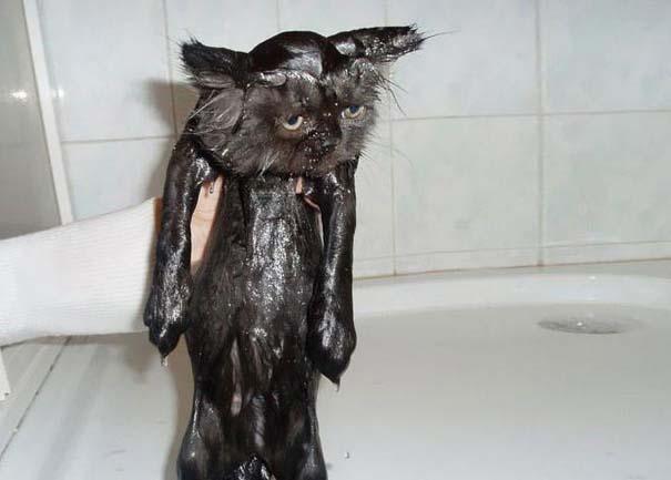 Φωτογραφίες που αποδεικνύουν πως οι γάτες μισούν το μπάνιο (17)