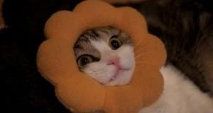 Γάτες που κόλλησαν στα πιο απίθανα πράγματα (Video)