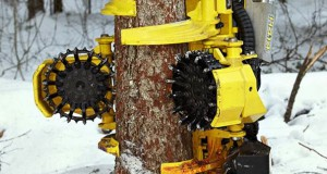 Ο τρομακτικός καταστροφέας δασών (Video)