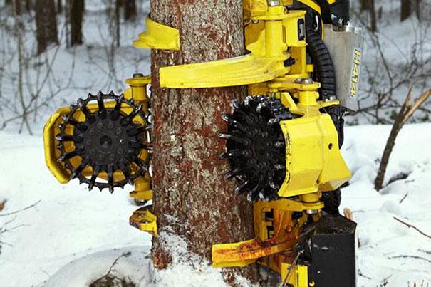 Ο τρομακτικός καταστροφέας δασών (1)