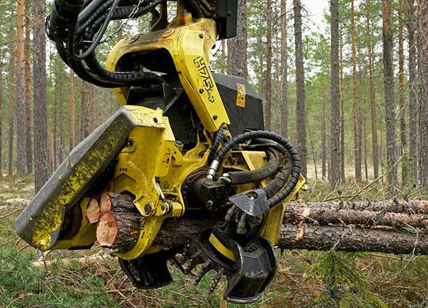 Ο τρομακτικός καταστροφέας δασών (2)