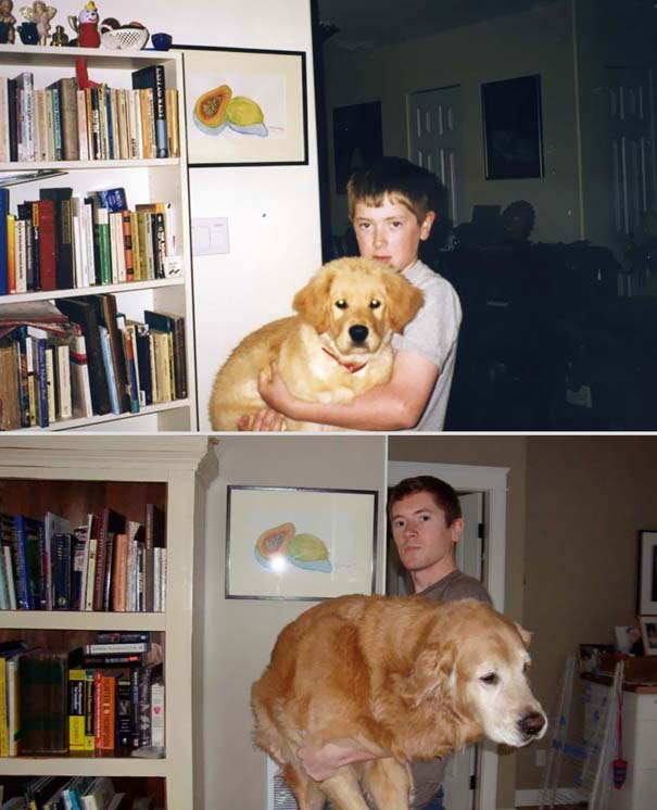 Κατοικίδια πριν και μετά (22)
