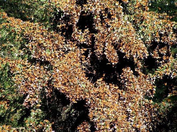Μοιάζουν με φύλλα (2)