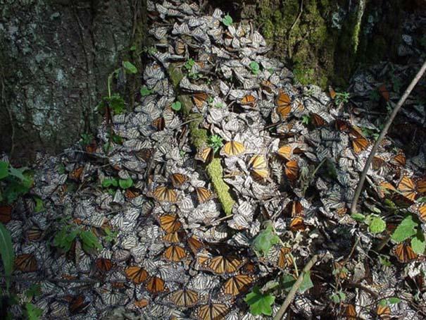 Μοιάζουν με φύλλα (7)