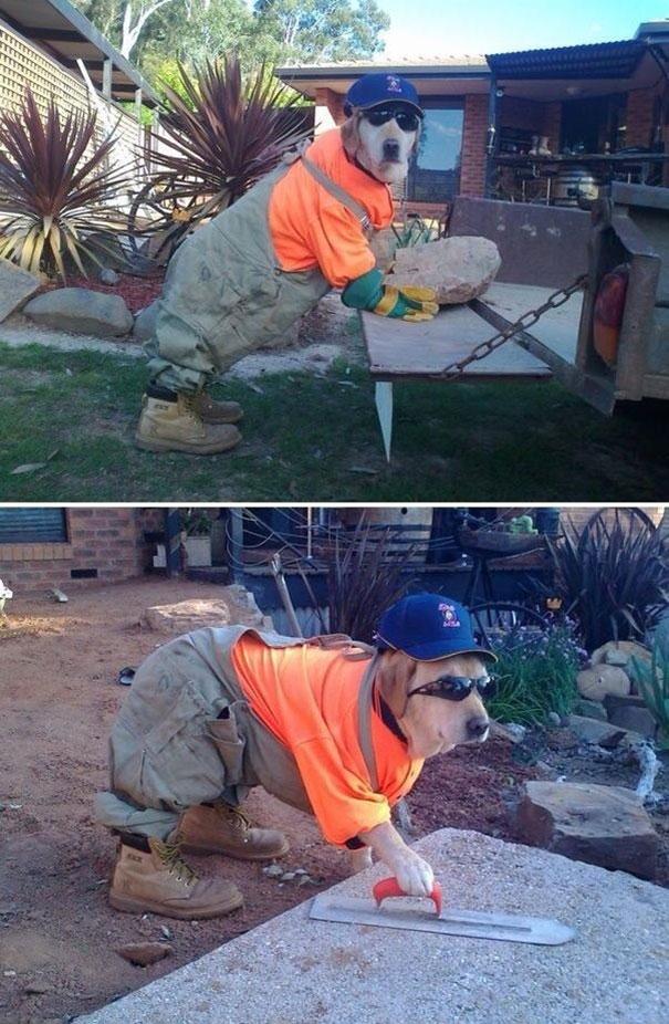 Δουλεύοντας σαν το σκυλί | Φωτογραφία της ημέρας