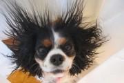 Σκύλοι και στατικός ηλεκτρισμός