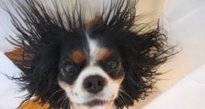 Σκύλοι και στατικός ηλεκτρισμός (Video)