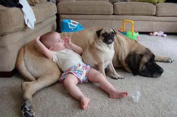 Φωτογραφίες που αποδεικνύουν πως οι σκύλοι είναι οι καλύτεροι φίλοι των παιδιών (13)