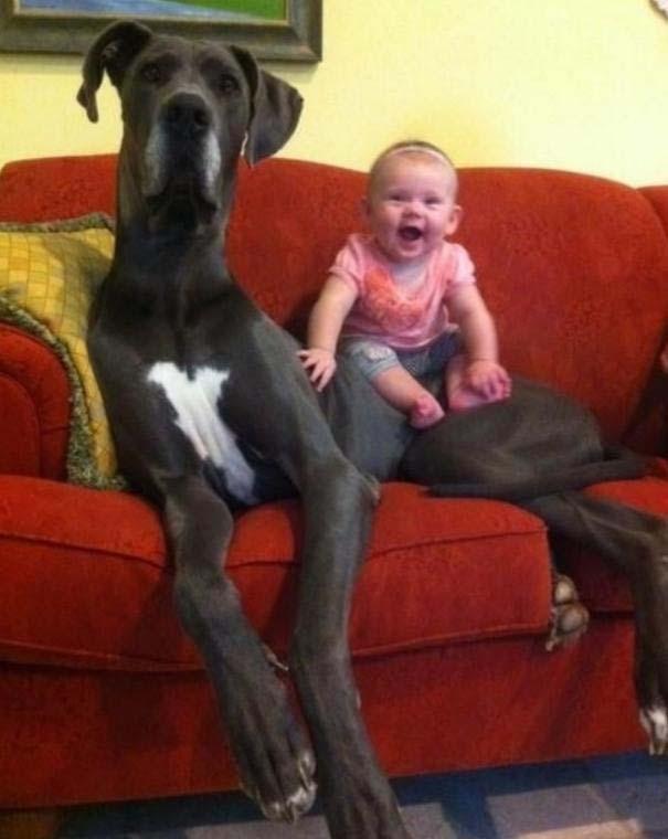 Φωτογραφίες που αποδεικνύουν πως οι σκύλοι είναι οι καλύτεροι φίλοι των παιδιών (16)