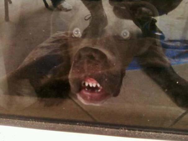 Σκύλοι που τα έχουν χαμένα (2)