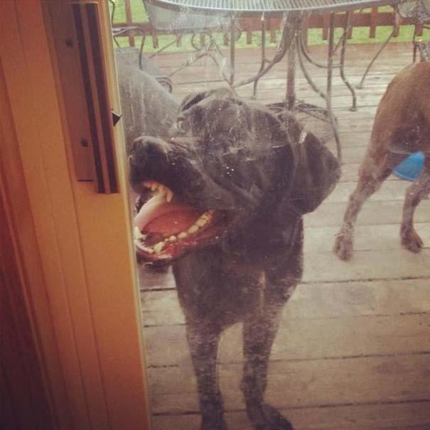 Σκύλοι που τα έχουν χαμένα (4)