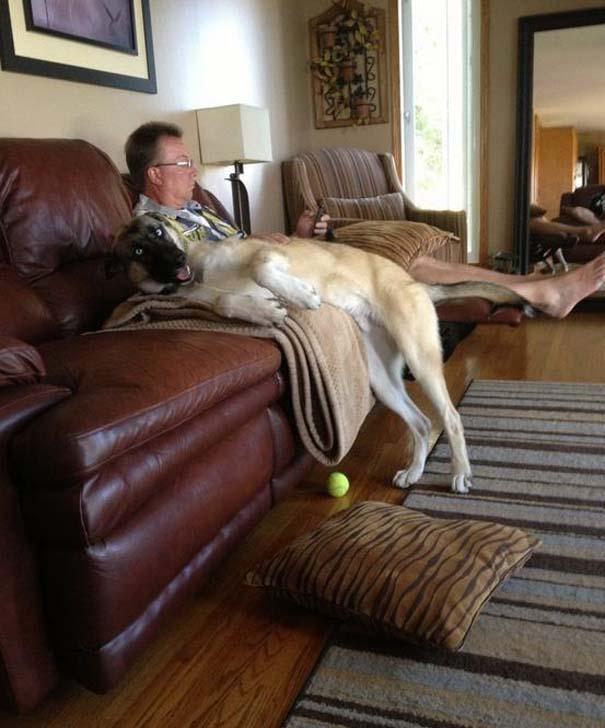 Σκύλοι που τα έχουν χαμένα (10)