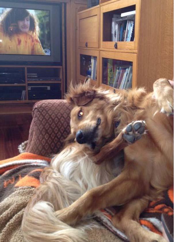 Σκύλοι που τα έχουν χαμένα (25)