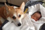 Σκύλοι προστατεύουν μωρά
