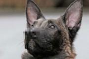 Σκύλος με δύο μύτες | Otherside.gr (1)